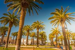 Palm trees in a tropical resort at beautiful sunny day. Image of tropical vacation and sunny happiness. Royalty Free Stock Image