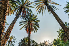 Palm trees in a tropical resort at beautiful sunny day. Royalty Free Stock Photography