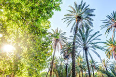 Palm trees in a tropical resort at beautiful sunny day. Stock Image