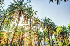 Palm trees in a tropical resort at beautiful sunny day. Royalty Free Stock Photo