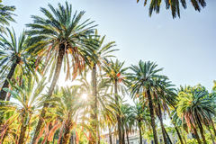 Palm trees in a tropical resort at beautiful sunny day. Royalty Free Stock Image