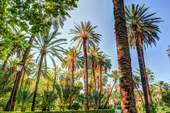 Palm trees in a tropical resort at beautiful sunny day. Stock Photography
