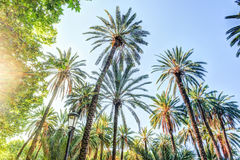 Palm trees in a tropical resort at beautiful sunny day. Royalty Free Stock Photos