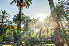 Palm trees in a tropical resort at beautiful sunny day. Stock Images