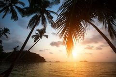 Palm trees on a tropical sea beach during sunset. Nature. Palm trees on a tropical sea beach during sunset Royalty Free Stock Images