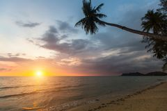 Palm trees on a tropical sea beach during sunset. Nature. Palm trees on a tropical sea beach during sunset Stock Image