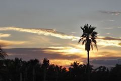 Palm Trees with Tropical Sunset Royalty Free Stock Image