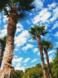 Palm trees. Tropical view of Palm trees over a lightly cloudy blue sky Royalty Free Stock Images