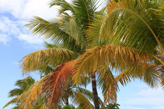 Palm Trees in the Tropics Against a Beautiful Sky Stock Photos