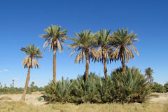 Palm trees in tropics Stock Photo