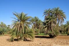 Palm trees in tropics royalty free stock photo