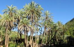 Palm trees in tropics Stock Photos