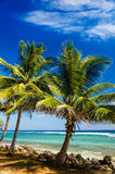 Palm Trees and Turquoise Water Royalty Free Stock Images