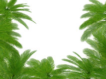 Palm trees und hibiscus flowers frame Royalty Free Stock Image
