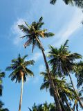 Palm trees under the beautiful sky stock photography