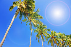Palm trees under blue sky Royalty Free Stock Image