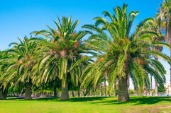 Palm trees Stock Photography