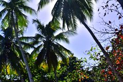 Palm trees under the blue sky royalty free stock photo