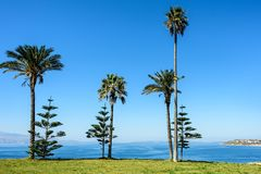 Palm trees under clear blue skies on a field covered with green. Grass with sea visible in a distance Royalty Free Stock Photos