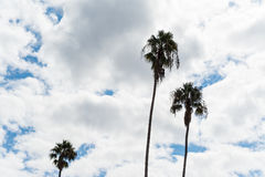 Palm trees under a cloudy sky in Los Angeles Stock Photos