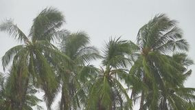 Palm Trees under Heavy Rain. Shot with Sony RX10 IV 25 fps FHD stock footage
