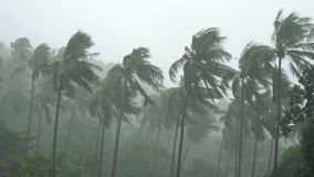 Palm trees under heavy tropical rain stock footage