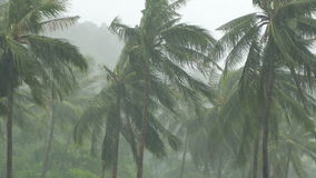 Palm Trees Under Heavy Tropical Rain stock video