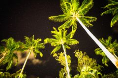 Palm trees under the stars of queensland royalty free stock photo