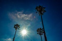 Palm trees under the sun Royalty Free Stock Photos