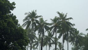 Palm trees under tropical rain stock footage