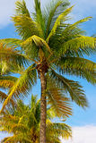 Palm trees under a tropical sun. Royalty Free Stock Photos