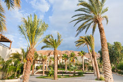 Palm trees under wind in resort Royalty Free Stock Images