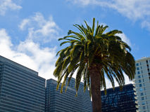 Palm Trees in an Urban Setting Royalty Free Stock Image