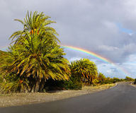 Palm Trees Vai Beach Crete Greece Stock Photography