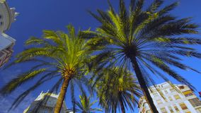 Palm Trees In Valencia Spain. Palm Trees Detail in Valencia Spain stock video