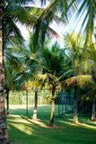 Palm trees of various sizes in a park on sunny day in Rio de Janeiro. Shadows in the foreground, and a deep blue sky. Rio de Janei. Ro, Brazil royalty free stock photography