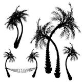 Palm trees. Vector elements royalty free illustration