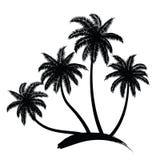 Palm trees vector Stock Photo