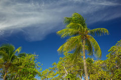Palm trees in the caribbean Royalty Free Stock Photo