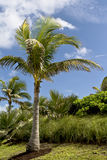 Palm trees and vegetation in the tropics Royalty Free Stock Photos