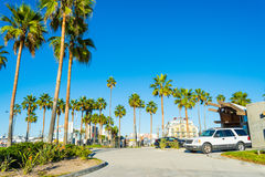 Palm trees in Venice beach Royalty Free Stock Photography