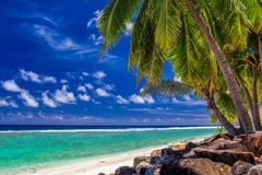 Palm trees on the vibrant beach, tropical Cook Islands, Rarotong Royalty Free Stock Photography