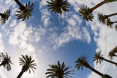 Palm trees view from bottom Royalty Free Stock Photography