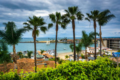 Palm trees and view of the Pacific Ocean in Corona del Mar  Stock Image