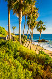 Palm trees and view of the Pacific Ocean at Heisler Park  Stock Photos