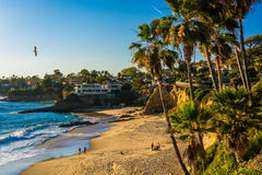 Palm trees and view of the Pacific Ocean, at Heisler Park. Laguna Beach, California royalty free stock images