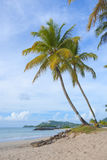 Palm trees on vigie beach Stock Photo
