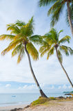 Palm trees on vigie beach Stock Photos