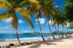 Palm trees on vigie beach Royalty Free Stock Photos