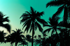 Palm trees vintage Royalty Free Stock Photography